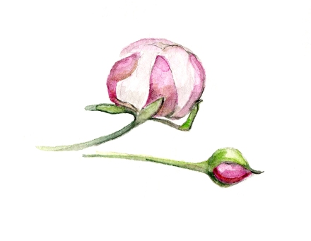 bulle-de-v-fleurs